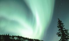 Dramatic green and white Northern Lights Aurora Borealis in the Fairbanks Alaska night sky