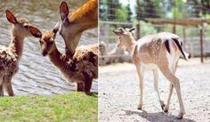 Deer at the Mini Zoo / http://sheepy.me/u/6v7o