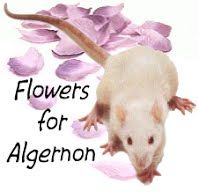 flowers for algernon study questions Book report on flowers for algernon 8th Grade English, Flowers For Algernon, Theatre Reviews, Report Writing, Progress Report, Eighth Grade, First Humans, Life Is Good, Books To Read