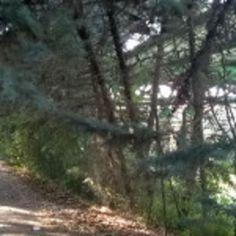 #Marche: #Degrado urbano e incuria a Ostra Vetere: Indecorosi paesaggi e strutture inutilizzabili da  (link: http://ift.tt/23RIY5l )