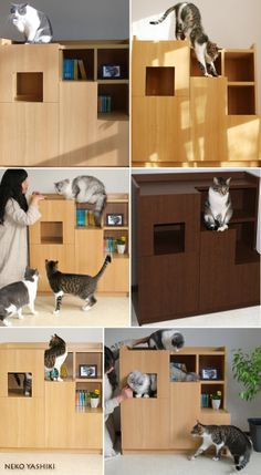 Furniture series Living with cat's house cat steer House floor