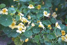 A little yellow by Anca Anghel-Lorinți Yellow, Plants, Hip Bones, Plant, Planets