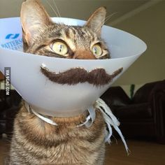 Friend's cat had surgery. Decided to have some fun with it.