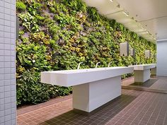 Yes! Another green wall, in the restroom this time ;-)    Such a cool idea. The air has to be amazing. I wonder how LEED would rate this?