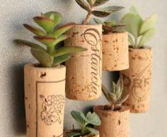 micro-giardini verticali
