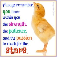 Chicken Quotes, Raising Chickens, Chickens Backyard, Always Remember, Be Yourself Quotes, Funny Quotes, Hilarious, Humor, Facebook