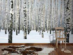 Fototapete Birkenwald im Schnee, Weihnachten kann kommen; Livingwalls Fototapete «Birkenwald im Winter» 470652
