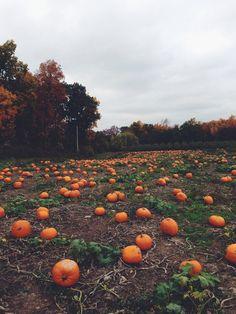Pumpkin patch dreaming