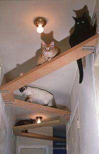 Cat aerial space