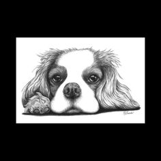 Cavalier King Charles Spaniel on Paw Dog 8 x 12 Signed Giclee Fine Art Print by artbyljgrove on Etsy https://www.etsy.com/listing/57674879/cavalier-king-charles-spaniel-on-paw-dog
