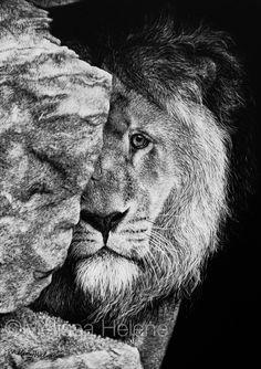 Lion, Sad Face   Melissa Helene Fine Arts + Photography www.melissahelene.com 5x7 #scratchboard #artwork #art #wildlife #lion #blackandwhite