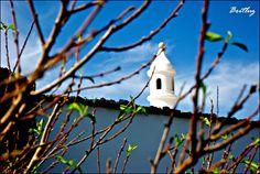 Estampas únicas. Bird, Outdoor Decor, House, Home Decor, Lanzarote, Decoration Home, Home, Room Decor, Birds