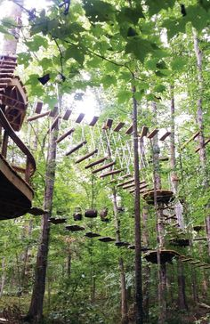 Knoxville, TN - Navitat  - a treetop adventure park with ziplines, bridges, swings, nets, elevated tunnels and more!