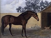 The Godolphin Arabian (c. 1724 – 1753) Originally, this small stallion was considered inferior to the larger European horses of the time and not meant to be put to stud. Many famous American horses of the past trace their sire line back to the Godolphin Arabian. These include Seabiscuit, Man o' War, War Admiral, and Silky Sullivan