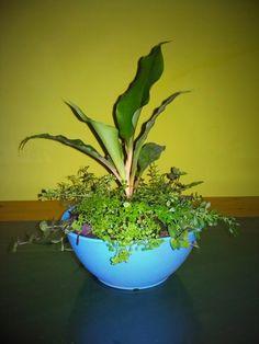 Tropis plant