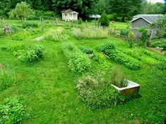 How to Grow a Garden Using Permaculture Principles