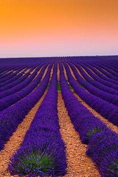 Lavender field at sunset - by Tomáš Vocelka (Plateau de Valensole, Provence. Belle Image Nature, Image Nature Fleurs, Flowers Nature, Images Cools, Beautiful World, Beautiful Places, Beautiful Sunset, Cool Pictures, Beautiful Pictures
