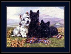 English-Picture-West-Highland-Scottish-Terrier-Dog-Art