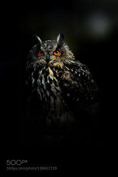 http://ift.tt/1K6283m #animals night owl by jirfren http://ift.tt/20KPV8w #pierceandbiersadorf