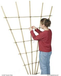 Build a Bamboo Trellis: step by step instructions on making a vertical garden structure out of sustainable bamboo poles. They last well, are lightweight, portable & low cost. Even better if you grow bamboo. Bamboo Trellis, Bamboo Poles, Diy Trellis, Garden Trellis, Trellis Ideas, Plant Trellis, Privacy Trellis, Clematis Trellis, Rose Trellis