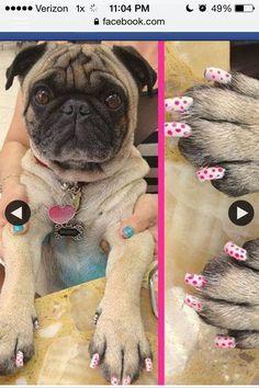pugs polish
