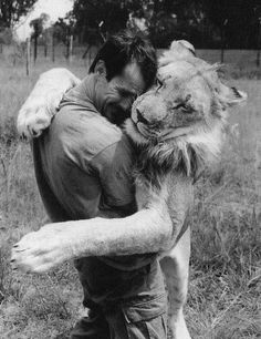 I absolutely love Lions as well as Tigers. What a dream it would be to be cuddles by a beautiful lion