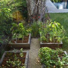 How To Build A Raised Vegetable Garden Design, Pictures, Remodel, Decor and Ideas