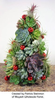 Succulent Tree created by Patricia Steinman http://www.mayesh.com/Blog/tabid/67/EntryId/229/Succulent-Airplant-Christmas-Tree.aspx