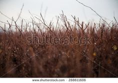 Abstract brown bushes shallow depth of field - stock photo
