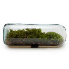 Moss and mini terrariums are ALWAYS okay.