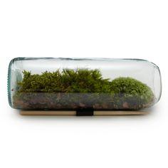 MOSS TERRARIUM BOTTLE | Glass Terrarium Gift | UncommonGoods