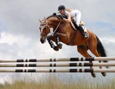 Show jumping! Or Jumping horses in general. Hope to own a horse one day that can take me higher.lol