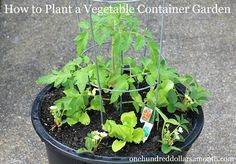 How to Start a Vegetable Container Garden