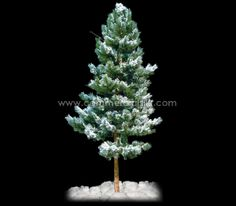Bring the winters to your homes and offices with artificial pines http://www.commercialsilk.com/toolkit/post/Bring-the-winters-to-your-homes-and-offices-with-artificial-pines.aspx #artificialtreesandpines