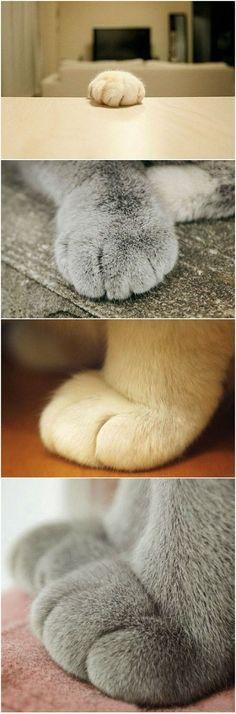 looooooove kitty paws :)