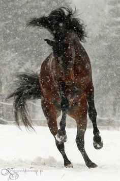 Dancing in the snow...