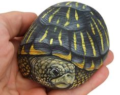 Unique Hand Painted Tortoise A Wonderful Box Earth Turtle Painted with Acrylic on a Perfectly Shaped Sea Rock is part of Turtle painting I Painted this Rock Tortoise on a Wonderful Shaped Natural - Turtle Painting, Pebble Painting, Pebble Art, Stone Painting, Painted Rock Animals, Hand Painted Rocks, Turtle Painted Rocks, Painted Turtles, Painted Stones