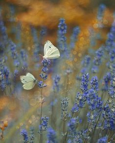 Free Pictures, Free Images, Butterfly Flowers, Modern Graphic Design, Bokeh, My Photos, Insects, Bloom, Seasons