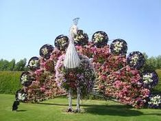 Image result for dubai miracle garden 2018 bulk hd wallpapers