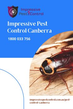 Impressive Pest Control Canberra is the best place for Pest Control Canberra. We are approved in giving excellent pest control services. We provide a full range of Pest Control in Canberra for residential as well as commercial premises. Pest Control Services, Brisbane, The Good Place