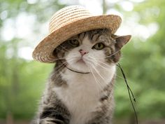 Maru in a hat