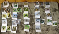 Pendant le printemps et l'été de cette année nous avons commencé à nous intéresser aux oiseaux que nous pouvions croiser au cours de nos...