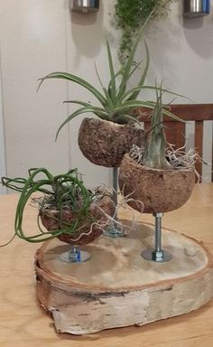 Beautiful Coconut Planters: An Exotic Decor For Balconies - Unique Balcony & Garden Decoration and Easy DIY Ideas Air Plant Display, Plant Decor, Air Plants, Indoor Plants, Indoor Gardening, Decoration Branches, Coconut Shell Crafts, Decoration Plante, Balcony Garden
