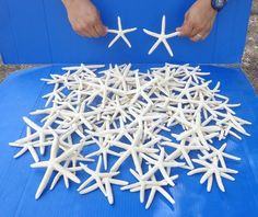 Craft Shells 3120: 100 Piece Of White Pencil Finger Starfish 4 To 6 Inch Wedding Seashells #6250-S -> BUY IT NOW ONLY: $54.99 on eBay!