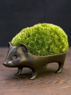 Hedgehog bonsai with cute back moss Moss Garden, Garden Art, Moss Plant, Keramik Design, Indoor Plants, Pot Plants, Indoor Outdoor, Houseplants, Container Gardening