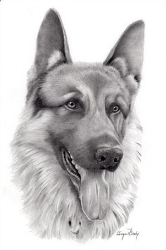 Pencil Portrait Mastery - realistic-pencil-drawings-of-animals-115 More - Discover The Secrets Of Drawing Realistic Pencil Portraits