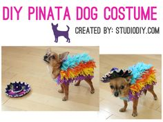 Cinco de Mayo - DIY Pinata Dog Costume  Please do this to Elsie for Halloween!