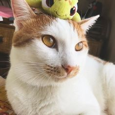 so cute!🤗🏝 #disney#スクワート#ニモ#ファインディングニモ#nemo#findingnemo#squirt#亀#カメ #ディズニー#2ショット#ねこ#猫#ネコ#cat #cats#愛猫#にゃんこ#ねこ部#若干#嫌がってる #かわいい#可愛い#cute#cuty#good#animal #animals#socute
