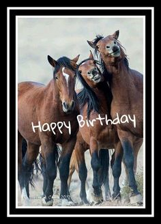 Horses happy birthday: