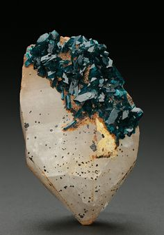 Rich blue lustrous gemmy-translucent abundant bladed crystals of the rare mineral Veszelyite measuring to 4mm are concentrated around two faces of a white Quartz crystal with some brown 'Limonite'. A classic mineral from the Black Pine Mine, Montana, USA.